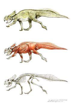 Protoceratops, Muddy Colors: The Art of Terryl Whitlatch # creature animals Dinosaur Drawing, Dinosaur Art, Prehistoric Dinosaurs, Prehistoric Creatures, Weird Creatures, Fantasy Creatures, Terryl Whitlatch, Jurassic Park World, Extinct Animals