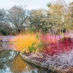 I want all of it + plus a beautiful Blue spruce. ⠀⠀⠀⠀⠀⠀⠀⠀⠀ What are your favorite winter garden plants? ⠀⠀⠀⠀⠀⠀⠀⠀⠀ ⠀⠀⠀⠀⠀⠀⠀⠀⠀ Lovely image from @the_rhs - where you can find lots of beautiful images from Royal Horticultural Society gardens and events. ⠀⠀⠀⠀⠀