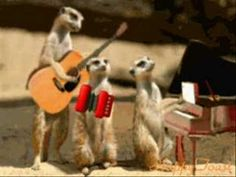 The perfect Meerkat Jamming Band Animated GIF for your conversation. Discover and Share the best GIFs on Tenor.