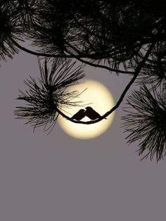 Beautiful Moon, Beautiful Birds, Beautiful Pictures, Moon Photography, Amazing Photography, Mystic Moon, Moon Pictures, Good Night Moon, Pretty Birds