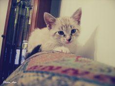 A little friend!!! *-* #crystal #cat #blue #eyes #meow