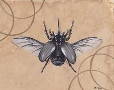 Original Realism Charcoal Drawing of Beetle by DeWeeseCollective