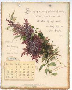 Lilac-June Calender