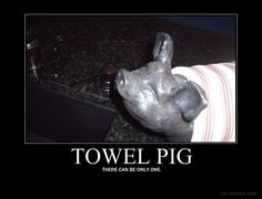 Towel Pig