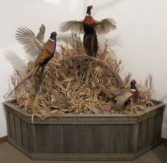 Now that the spring turkey-hunting season is nearly upon us, you should find the right shotgun. As turkey hunting has become increasingly popular, more and more manufacturers have developed shotguns that have more features. Taxidermy Decor, Taxidermy Display, Bird Taxidermy, Pheasant Mounts, Deer Mounts, Archery Hunting, Duck Hunting, Turkey Hunting Season, Duck Mount