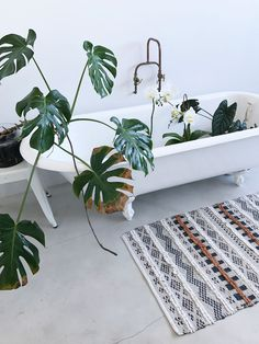 Large, leafy green plants in the bathroom to bring vibrancy. Lillies sit in the elegant white bath with roll top and carved feet. A beautiful, patterned, moroccan inspired mat adds color, and texture to the bathroom.