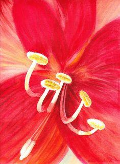 Amaryllis Flower Painting