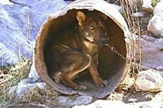Greek government : Enforce existing laws to save the Barrel Dogs Types Of Animals, Animals Of The World, Metal Barrel, The Ugly Truth, Stop Animal Cruelty, All Gods Creatures, Pet Life, Animal Welfare, Animal Rights