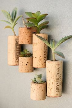 Hollow out a cork, plant a succulent inside; these are magnets, but could easily be affixed to a wall.....