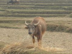 Essay about nepal countryside