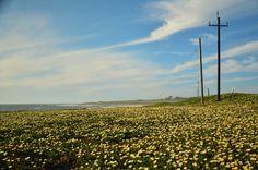 California Coast in the Bloom [OC] [1280x848]
