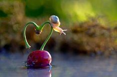 Vyacheslav Mishchenko - Photographer, Artist snail-love