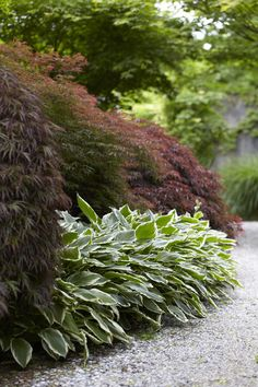 Let's admit it - most gardens have few passes that would fit magnificent Japanese maples in a border.