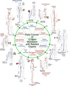 Daily course of meridians