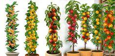 Columnar Fruit Trees: Create an orchard on your own patio! - Crafts Archives Columnar Fruit Trees: C Espalier Fruit Trees, Dwarf Fruit Trees, Front Gardens, Small Backyard Gardens, Small Patio, Diy Herb Garden, Edible Garden, Garden Oasis, Garden Gate