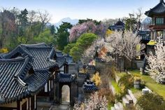 Nakseonjae in spring, Changdeok-Palace  낙선재의 봄