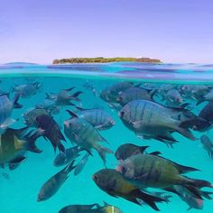 Underwater with the fish near Heron Island. Photo by @_markfitz via IG