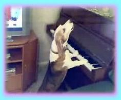 Standing Dog Plays Piano and Sings- VIDEO My dogs would sing with him !! LOL