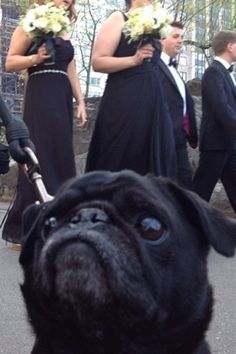 """9 Pug Photobombs Guaranteed To Put A Smile On Your Face #refinery29  http://www.refinery29.com/the-dodo/69#slide2  """"I always get emotional at weddings. I just can't help myself."""""""
