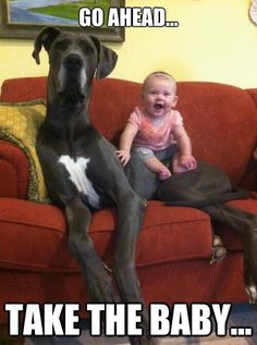 hahaha one day I'm going to take a picture just like this and send it out on Christmas cards or something.. big dogs and babies are just so cute together :)