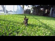 Foster Kitten Outside For The First Time + With Her Foster Dog Father - 3 Weeks Old + Music - YouTube
