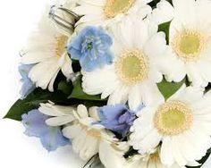 white gerbera bouquet - Google Search