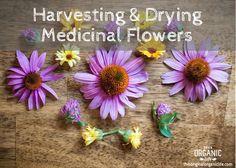 garden tips harvesting drying medicinal flowers, gardening