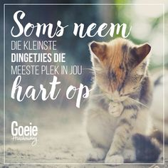 Goeie Nag, Goeie More, Kittens, Funny Quotes, Animals, Inspiration, Lisa, Beauty, Africans