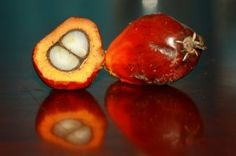 #Sustainable Palm Oil Sales Surge as Demand Meets Supply