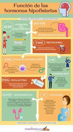 HORMONAS DE LA HIPOFISIS PARA ENFERMERIA