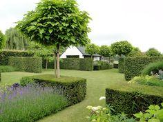 "clipped box hedges block planted lavender, and uniform (Catalpa bignonioides 'Nana' ""Indian Bean tree"") trees - lovely! Thomas Leplat"