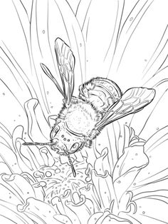Blue Orchard Bee coloring page from Bees category. Select from 20966 printable crafts of cartoons, nature, animals, Bible and many…