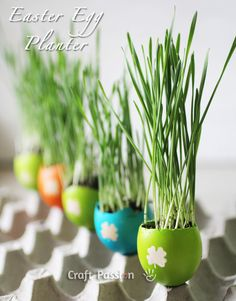 Turn easter eggs into cat grass planters for the kitties.