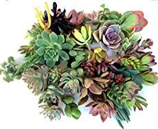 While planting succulents seems like an easy thing to do, this step-by-step photo tutorial will help make sure your succulent is happy in it's new home.