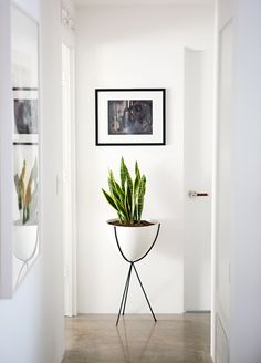 Snake Plant: Easy to care for and looks perfect placed in an elevated planter in the hallway.