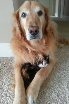 So cats and dogs can be best friends after all!
