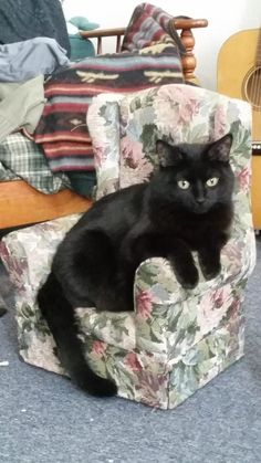 Literally Just A Bunch Of Photos Of Cats Sitting In Tiny Chairs - Meet scrappy 19 year old black cat grew unique marble fur due rare skin condition