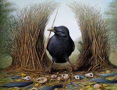 paradis express: Ptilonorhynchidae / Bowerbird