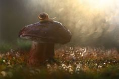 Vadim Trunov, a self-taught nature photographer based in Voronezh, Russia, takes beautiful macro photos of snails, insects and mushrooms that seem to personify them and weave beautiful little stories around these oft-overlooked creatures' lives. Macro Photography, Amazing Photography, Photographie Macro Nature, Fotografia Macro, Tiny World, All Gods Creatures, Nature Animals, Photos, Pictures