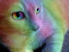 Rainbow Cat | Completely rainbow cat by ~bluemoongem on deviantART