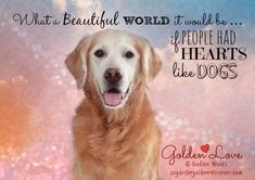 What a Wonderful World it Would be if We All Had Hearts Like Dogs