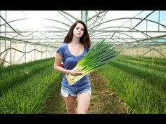 Amazing Modern Agriculture Machine - Harvest of a Welsh onion Hydroponic Farming, Aquaponics, Diy Garden Projects, Garden Tools, Garden Ideas, Agriculture Machine, Modern Agriculture, Cannabis Plant, Edible Garden
