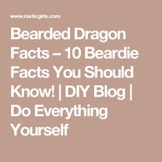 Bearded Dragon Facts – 10 Beardie Facts You Should Know!   DIY Blog   Do Everything Yourself