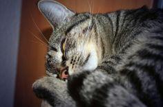 Kaninchenfan Lucky - Mein Kaninchenloch: His pink nose is so cute ♡  #cat #neko #katze   http://kaninchenfanlucky-meinkaninchenloch.blogspot.de/2014/01/his-pink-nose-is-so-cute.html