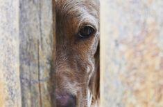 Stadalen's Fjona❤️ #dog#norway#englishsetter#europe#pose#cutie