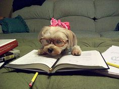 if only I looked that cute when I studied for finals...