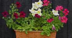 Free Online Jigsaw Puzzles, Petunias, Tulips, Wallpaper, Green, Flowers, Plants, Wallpapers, Flora