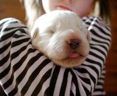 puppy tongue!!!