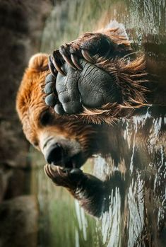 Cute bear holding his paw