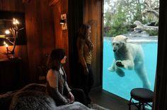 شاهد ماذا حدث حول العالم في أسبوع فليش، فرنسا دب قطبي يلعب في بركة مياة في حديقة الحيوان